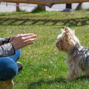 Comment apprendre la propreté à votre chiot ou chien ?